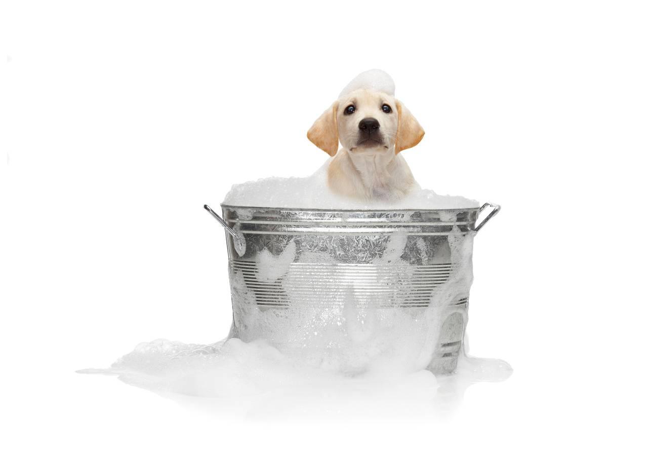 You Smell Like A Dog The Aspiring Clean Freak